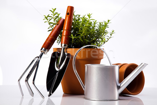 Gardening concept, vivid bright springtime theme Stock photo © JanPietruszka