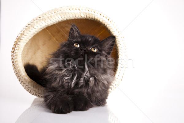 面白い 子猫 眼 猫 動物 美しい ストックフォト © JanPietruszka