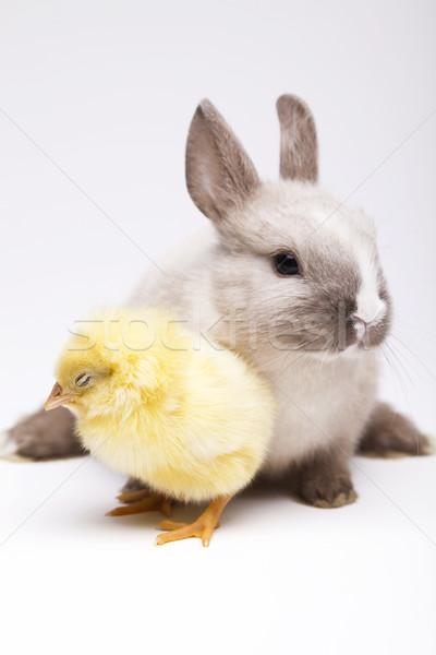 Pintinho coelho páscoa bebê pássaro frango Foto stock © JanPietruszka