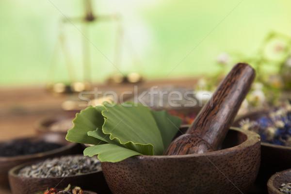 Ginkgo,maidenhair tree, Natural remedy Stock photo © JanPietruszka