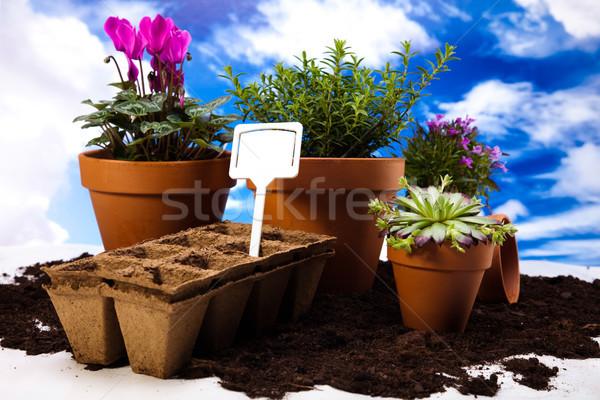 Garden concept, vivid bright springtime Stock photo © JanPietruszka
