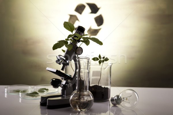 Químico laboratório artigos de vidro equipamento ecologia plantas Foto stock © JanPietruszka