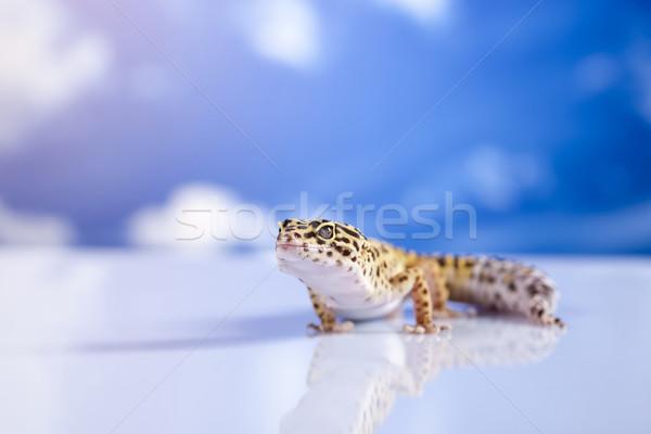 Gekko blauwe hemel oog lopen witte dier Stockfoto © JanPietruszka