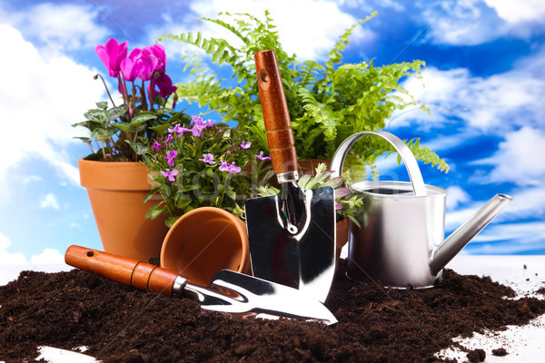 Gardening concept, vivid bright springtime theme Stock photo © JanPietruszka