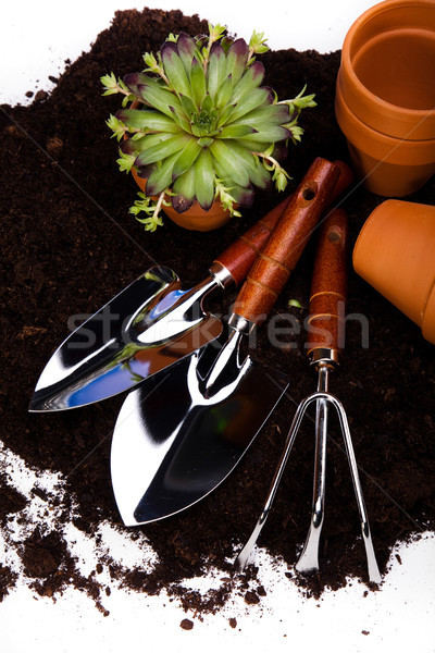 Spring garden, vivid bright springtime concept Stock photo © JanPietruszka