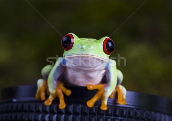 Сток-фото: экзотический · лягушка · красочный · природы · лист · красный
