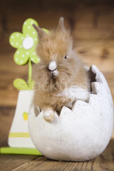 Easter, bunny  Stock photo © JanPietruszka