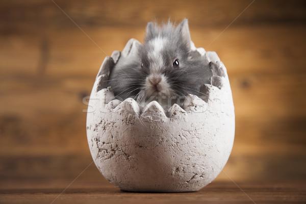 Conejos Pascua animales bebé vacaciones Foto stock © JanPietruszka