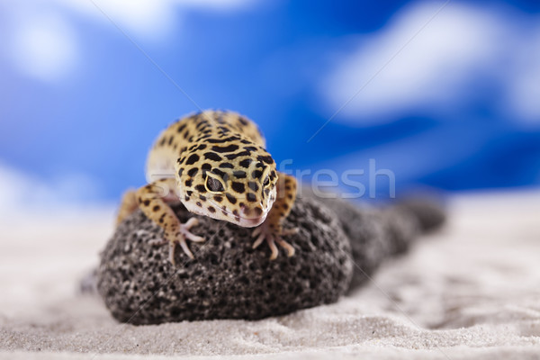 Small gecko reptile lizard Stock photo © JanPietruszka