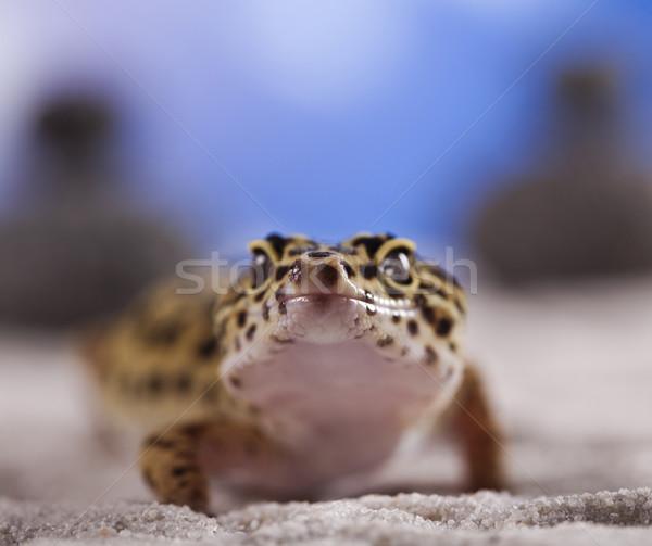ヤモリ は虫類 トカゲ 眼 徒歩 白 ストックフォト © JanPietruszka