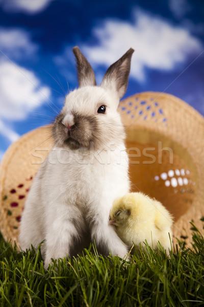 Chick in bunny Stock photo © JanPietruszka