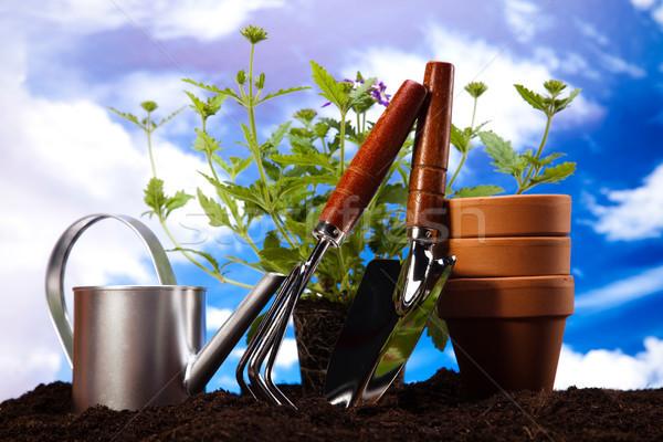 Foto stock: Jardín · planta · brillante · primavera · flor