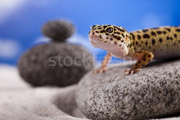 Gekkó hüllő gyík szem sétál fehér Stock fotó © JanPietruszka