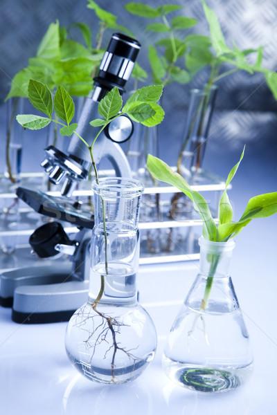 Laboratórium bio organikus modern gyógyszer tudomány Stock fotó © JanPietruszka