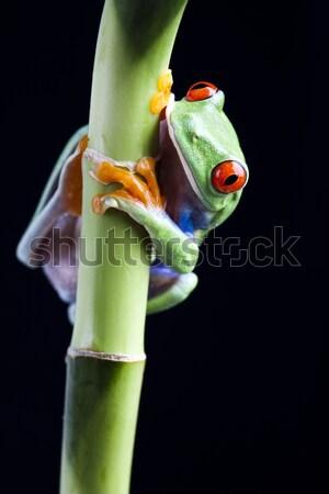 Tree frog on colorful background Stock photo © JanPietruszka