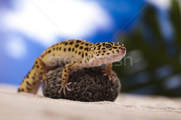 Gekon gad jaszczurka oka spaceru biały Zdjęcia stock © JanPietruszka