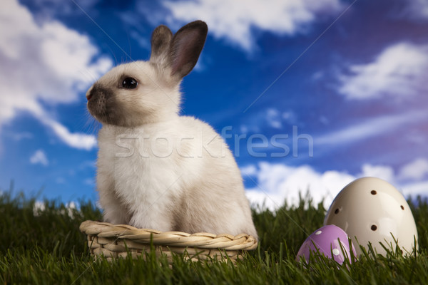 Spring baby bunny and green grass Stock photo © JanPietruszka