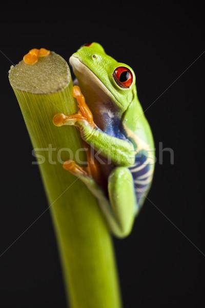 Béka dzsungel színes természet levél piros Stock fotó © JanPietruszka