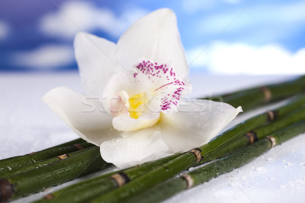 Stock photo: Orchid flower, Zen stones