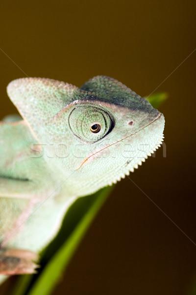 Kameleon heldere levendig exotisch klimaat bloem Stockfoto © JanPietruszka