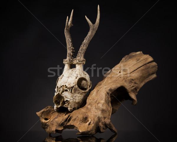 Herten schedel zwarte spiegel verweerde kunst Stockfoto © JanPietruszka