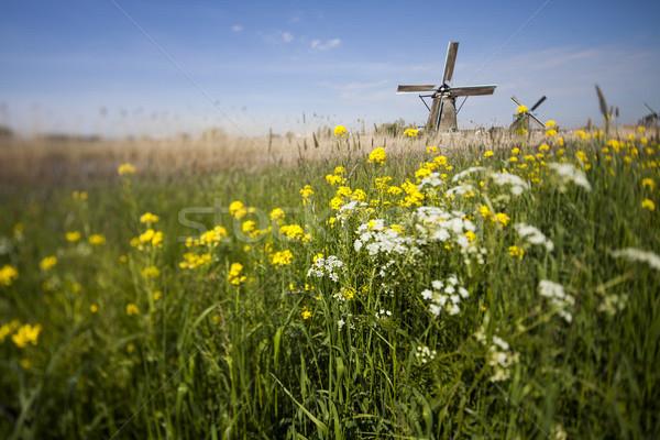 Traditioneel oude Nederland windmolen hemel gras Stockfoto © JanPietruszka