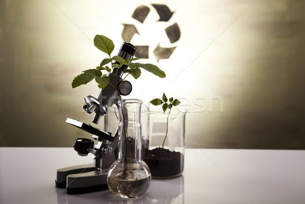 Eco laboratório natureza medicina planta lab Foto stock © JanPietruszka
