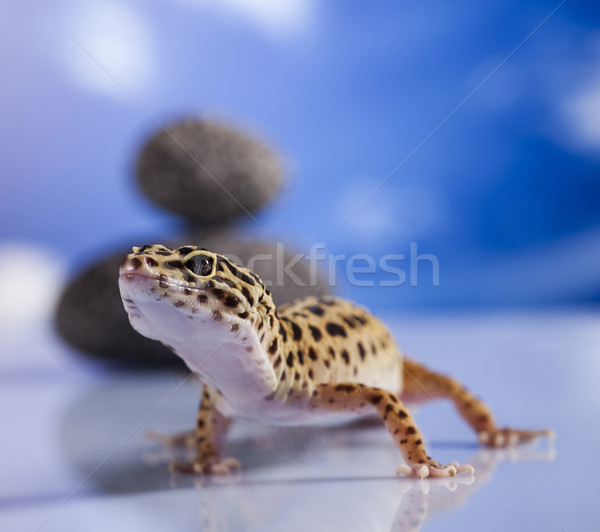 Gekon gad jaszczurka oka biały zwierząt Zdjęcia stock © JanPietruszka