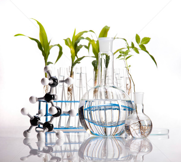 Chemistry equipment, plants laboratory experimental Stock photo © JanPietruszka
