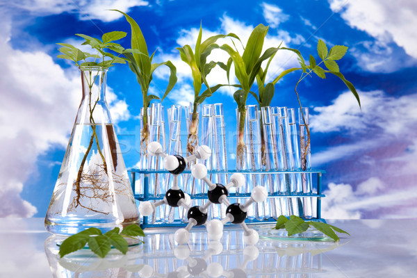 Science experiment with plant laboratory Stock photo © JanPietruszka