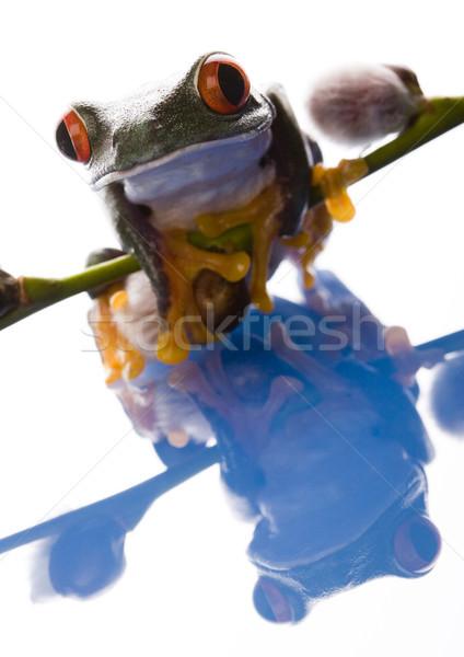 Пасху экзотический лягушка белый природы лист Сток-фото © JanPietruszka