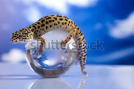 Mały gekon gad jaszczurka oka biały Zdjęcia stock © JanPietruszka