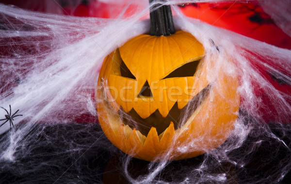 Spinnennetz Augen Hintergrund orange Raum Stock foto © JanPietruszka