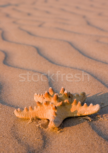 Natureza belo paisagem abstrato fundo Foto stock © JanPietruszka