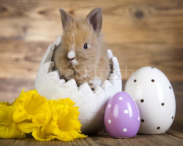 Spring baby bunny  Stock photo © JanPietruszka