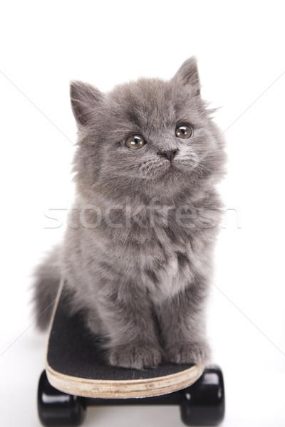 Skateboard weinig grijs kitten cute huisdier Stockfoto © JanPietruszka