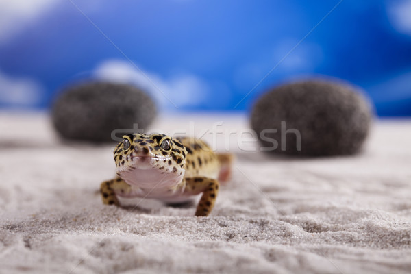 Gekkó hüllő gyík szem fehér állat Stock fotó © JanPietruszka