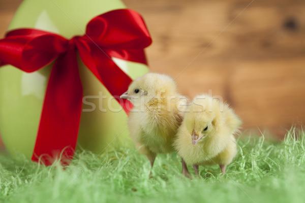 Easter animal and chick Stock photo © JanPietruszka