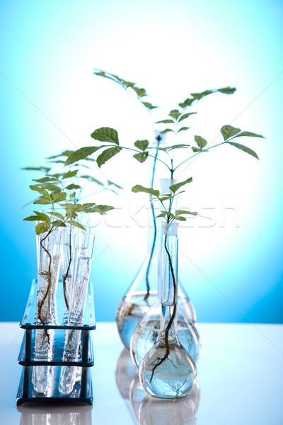 Plants and laboratory  Stock photo © JanPietruszka