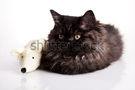Cica vicces kiscica szem macskák állat Stock fotó © JanPietruszka