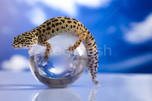 Globe in gecko Stock photo © JanPietruszka