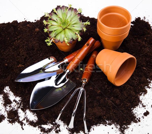 Gardening tools, vivid bright springtime concept Stock photo © JanPietruszka