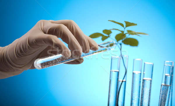 Foto stock: Ecologia · laboratório · experiência · plantas · natureza · medicina