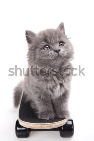 Skateboard, Little gray kitten, cute pet colorful theme Stock photo © JanPietruszka