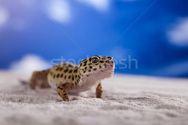 Lagartixa réptil lagarto olho branco animal Foto stock © JanPietruszka