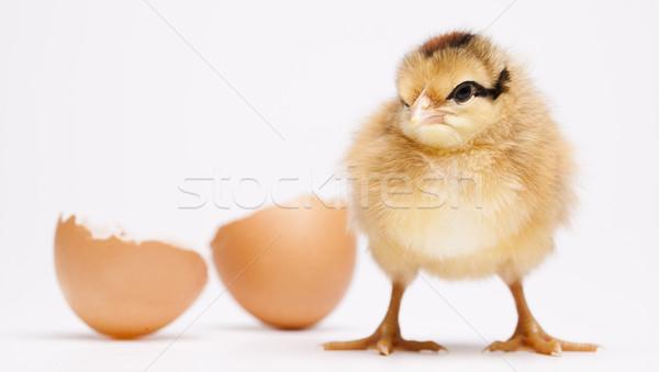 куриного яйцо Пасху счастливым фон Перу Сток-фото © JanPietruszka