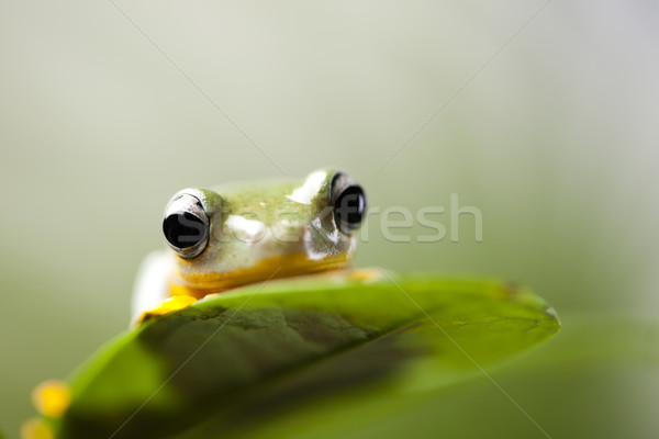 Frog Stock photo © JanPietruszka