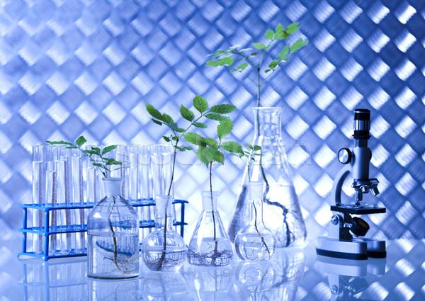 Laboratuvar züccaciye deneysel bitki tıbbi Stok fotoğraf © JanPietruszka