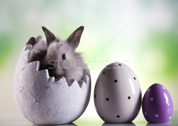 Easter bunny with eggs  Stock photo © JanPietruszka