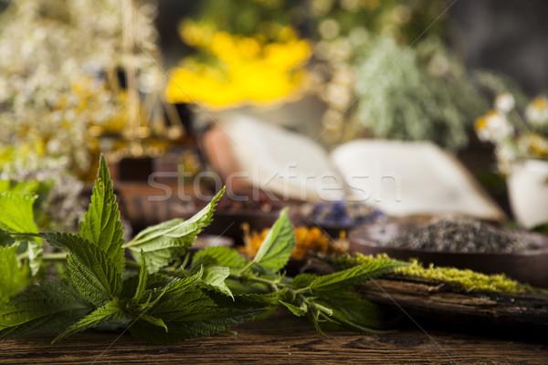 Libro mesa de madera naturaleza belleza Foto stock © JanPietruszka